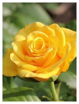 роза керно